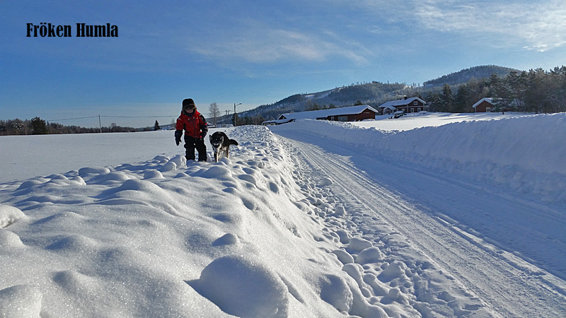 Mattisudden,vinter,februarisol, alaskanhuskey