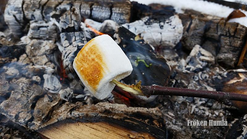 marshmallow,eld