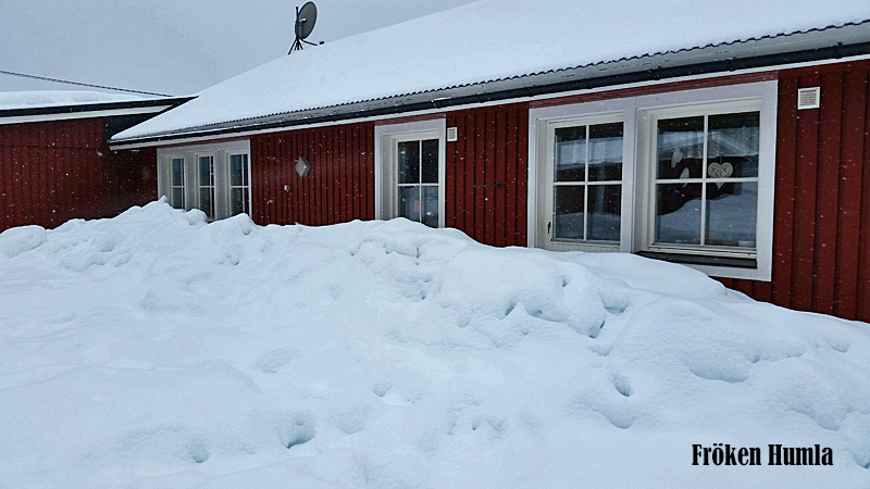 Mycket snö, vårvinter