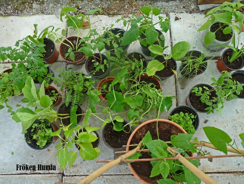 plantor,växthus