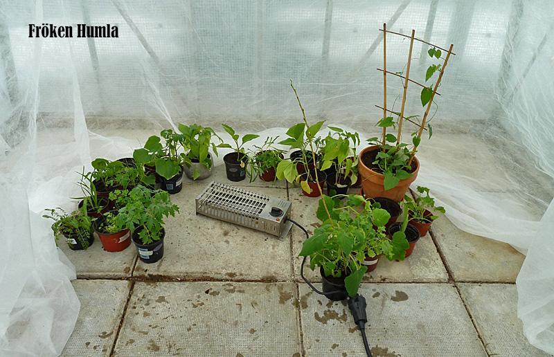 fiberdukstält, växthus,frostvakt