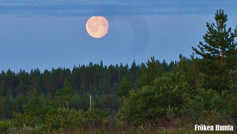 fullmåne,uteliv,kanot,fröken humla
