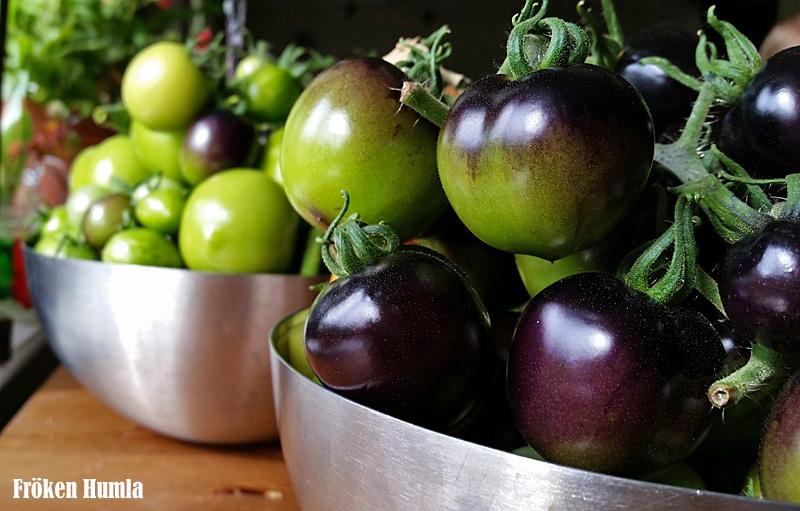 Tomater,skörda,odla,norrbotten,fröken humla