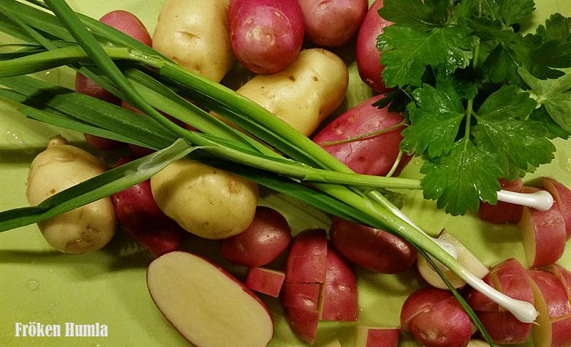 potatis,egenodlat,närodlat,ekologiskt,norrbotten,fröken humla