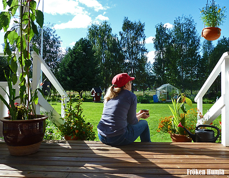kaffe,altan,solen,norrbotten,fröken humla,trädgård