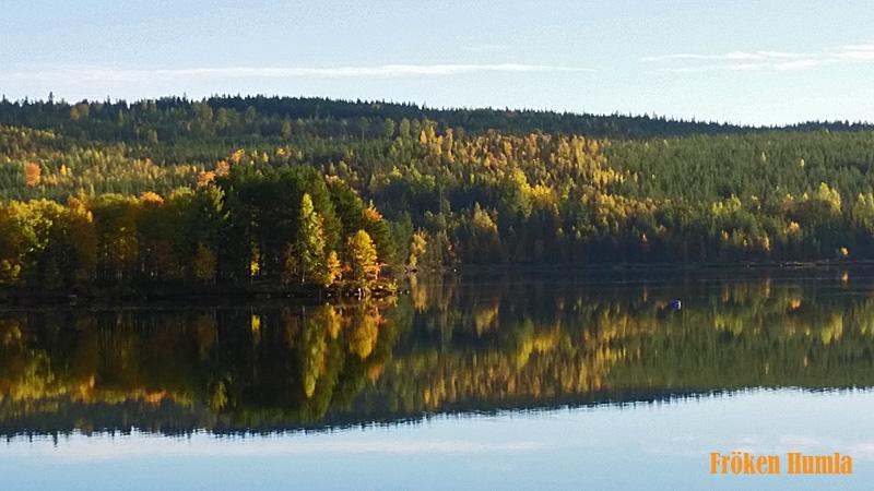 Lilla luleälv,jokkmokk,norrbotten,höst,fröken Humla,Jenny Holmgren