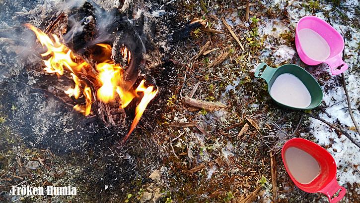 novemberlov,norrbotten,siberian huskey,eld,fika,skogen,fröken humla