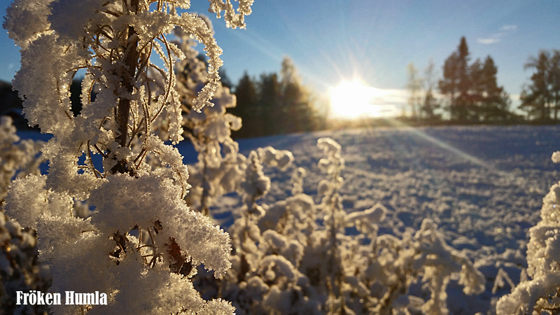 vinter,frost,norrbotten,fröken humla,jenny holmgren