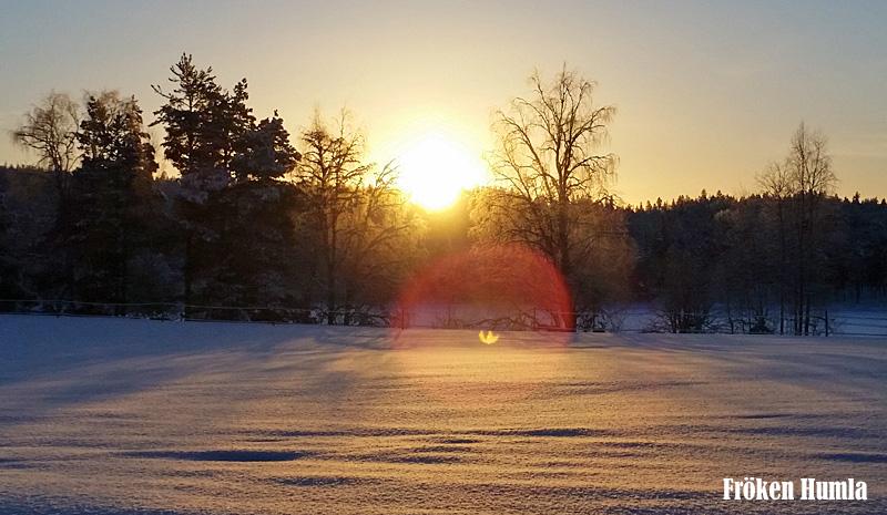 snö,sol,januari,mattisudden,norrbotten,fröken humla,jenny holmgren