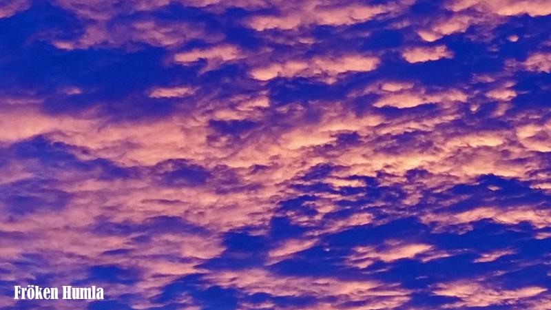 himmel,januari,norrbotten,fröken humla,jenny holmgren