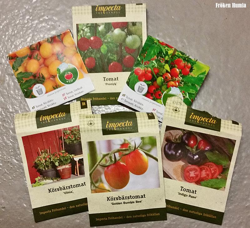 tomatfrön,impecta,norrbotten,odling,fröken humla,jenny holmgren
