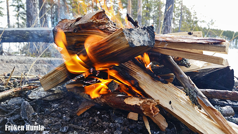eld,uteliv,naturen,vårvinter,norrbotten,fröken humla,glesbygd,jenny holmgren