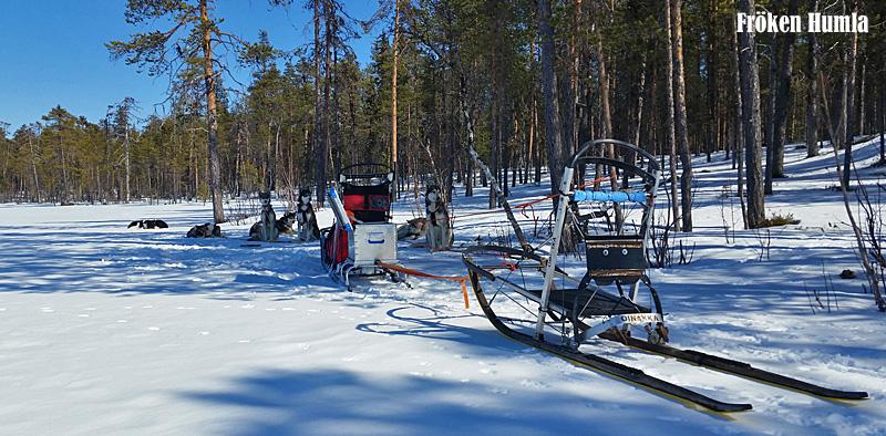 hundslädar,norrbotten, vår,snö,fröken humla,jenny holmgren