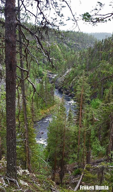 muddus,nationalpark,norrbotten,laponia,fröken humla,jenny holmgren