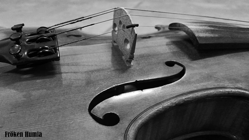 fiol,violin, fröken humla,norrbotten,jenny holmgren