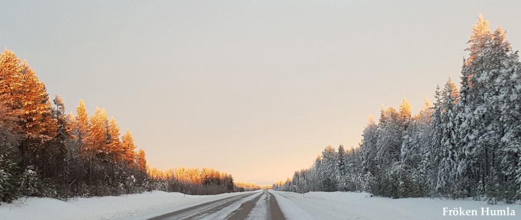 glesbygd, landsväg, norrbotten, fröken humla, jenny holmgren