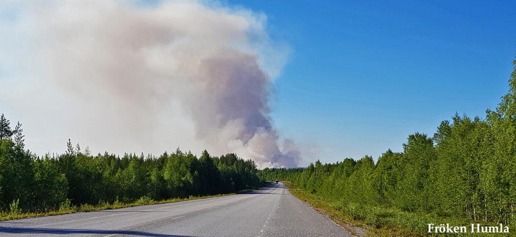 skogsbrand,sommaren,2018,Norrbotten,Jokkmokk,fröken humla,jenny holmgren