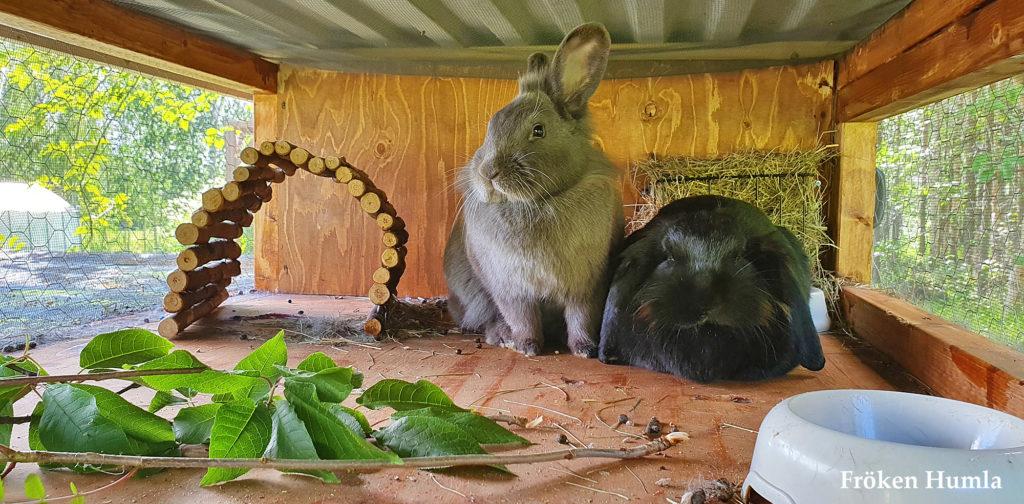 kanin, utebur, kaninbur, fröken humla, jenny holmgren, norrbotten,